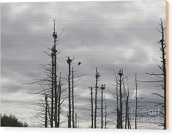 Nesting Blue Herons Wood Print by Erin Paul Donovan