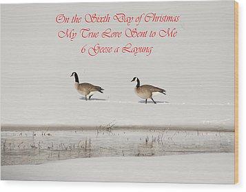Nesting Canada Geese Wood Print by Daniel Hebard