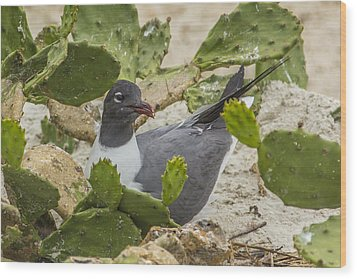 Wood Print featuring the photograph Nesting Laughing Gull by Paula Porterfield-Izzo