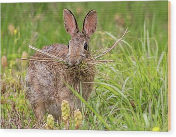Nesting Rabbit Wood Print by Terry DeLuco