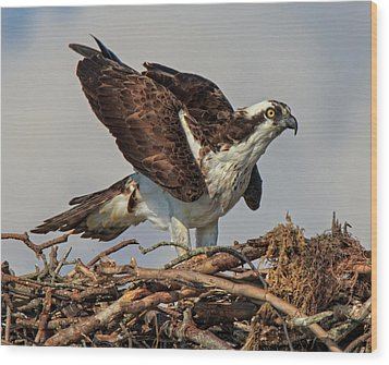 Wood Print featuring the photograph Nesting by Robert Pilkington