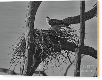 Wood Print featuring the photograph Nesting V2 by Douglas Barnard