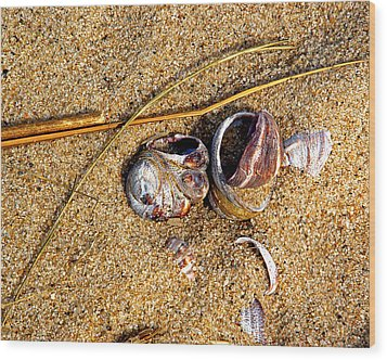 Nestled In The Sand Wood Print by Lynda Lehmann