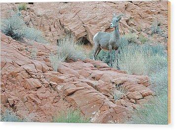 Nevada Rocks 31c Wood Print