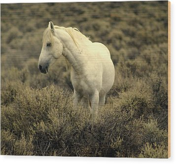 Nevada Wild Horses 4 Wood Print by Marty Koch
