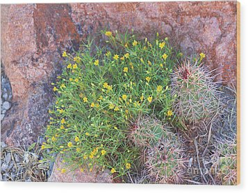 Wood Print featuring the photograph Nevada Yellow Wildflower by Linda Phelps