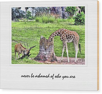Wood Print featuring the photograph Never Be Ashamed by Traci Cottingham