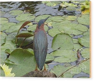 Nevis Bird Observes Wood Print by Margaret Brooks