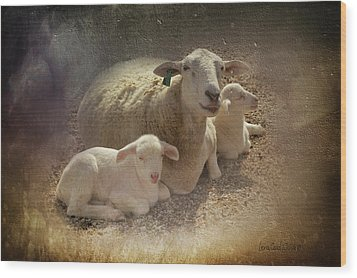 New Baby Lambs Wood Print by Lena Wilhite