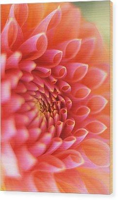New Beginnings Wood Print by Kathy Yates