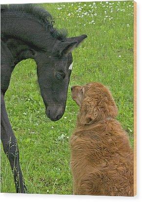 New Born Meeting Dog Wood Print