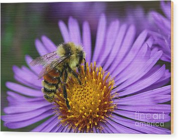 Wood Print featuring the photograph New England Aster And Bee by Steve Augustin