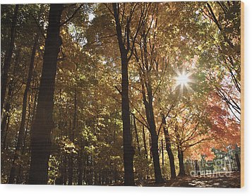 New England Autumn Forest Wood Print by Erin Paul Donovan