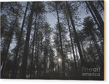 New England Red Pine Forest Wood Print by Erin Paul Donovan
