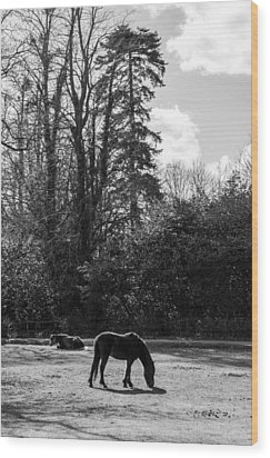 New Forest Silhouette Wood Print by Hazy Apple