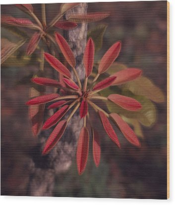 New Growth On A Shea Tree Wood Print by David Pluth