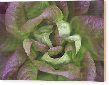 New Lettuce Wood Print by Joseph Skompski