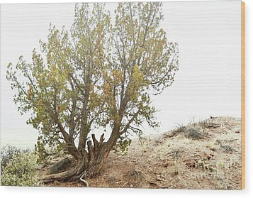 Wood Print featuring the photograph New Mexico Desert Southwest Tree by Andrea Hazel Ihlefeld