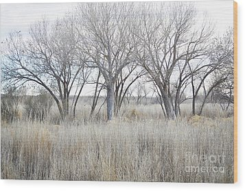 Wood Print featuring the photograph New Mexico Desert Tree Field by Andrea Hazel Ihlefeld