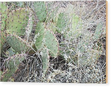 Wood Print featuring the photograph New Mexico Green Prickly Pear Cactus by Andrea Hazel Ihlefeld