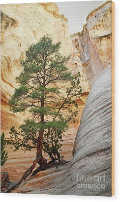 New Mexico Tent Rocks Slot Canyon Tree Landscape Wood Print by Andrea Hazel Ihlefeld