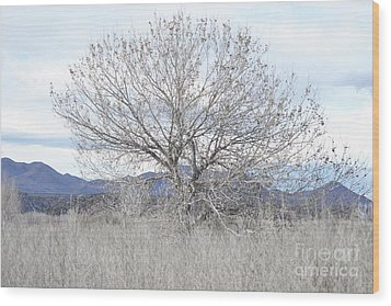 Wood Print featuring the photograph New Mexico Tree Mountain Landscape by Andrea Hazel Ihlefeld