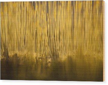 New Terra Firma Generating Wood Print by Douglas Barnett