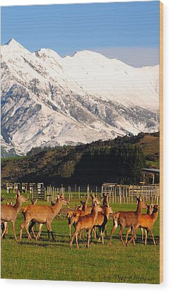 New Zealand Deer 3497 Wood Print by PhotohogDesigns