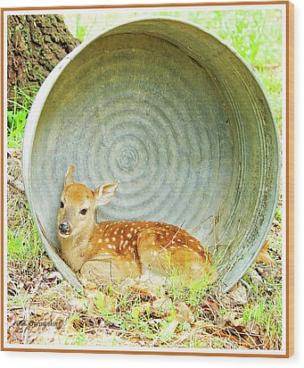Newborn Fawn Finds Shelter In An Old Washtub Wood Print by A Gurmankin