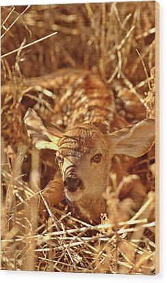 Newborn Fawn Wood Print by Mark Duffy