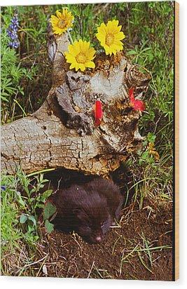 Newborn Foxes Wood Print by Dennis Hammer