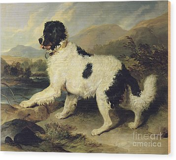 Newfoundland Dog Called Lion Wood Print by Sir Edwin Landseer
