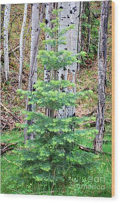 Wood Print featuring the photograph Next Years Christmas Tree by Donna Greene