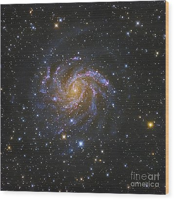 Ngc 6946, Also Known As The Fireworks Wood Print by Robert Gendler