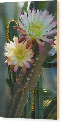 Wood Print featuring the photograph Night-blooming Cereus 4 by Marilyn Smith