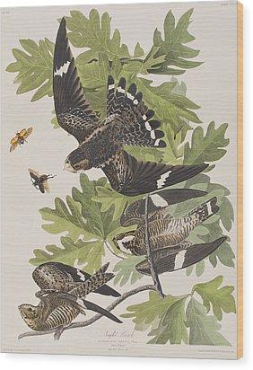 Night Hawk Wood Print by John James Audubon