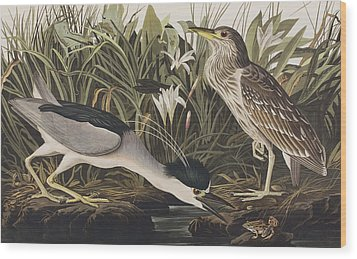 Night Heron Or Qua Bird Wood Print