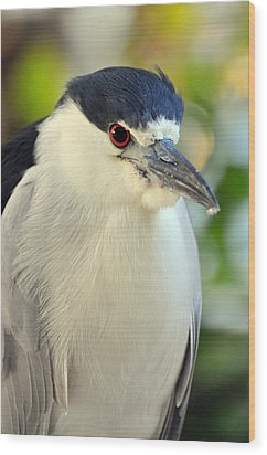 Night Heron Portrait In The Early Morning Light  Wood Print by Rose  Hill