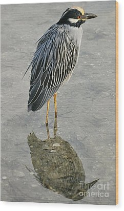 Night Heron Reflection Wood Print by Rose  Hill