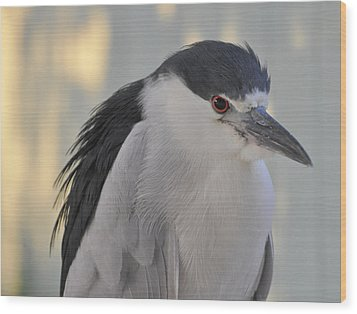 Night Heron  Wood Print by Rose  Hill