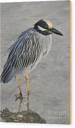 Night Heron With Breeding Colors Wood Print by Rose  Hill