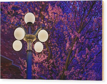 Night Of The Cherry Blossoms Wood Print