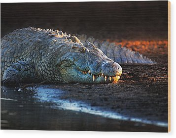 Nile Crocodile On Riverbank-1 Wood Print