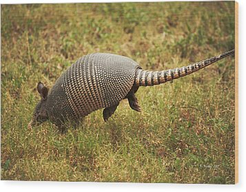 Nine-banded Armadillo Jumping Wood Print