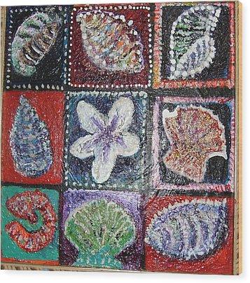 Nine Pretty Shells No Frame Wood Print by Anne-Elizabeth Whiteway