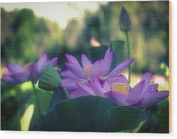 No Mud, No Lotus Wood Print