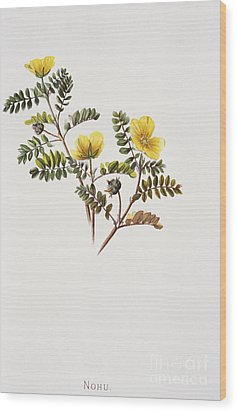 Nohu Flower - Vintage Wood Print by Hawaiian Legacy Archive - Printscapes