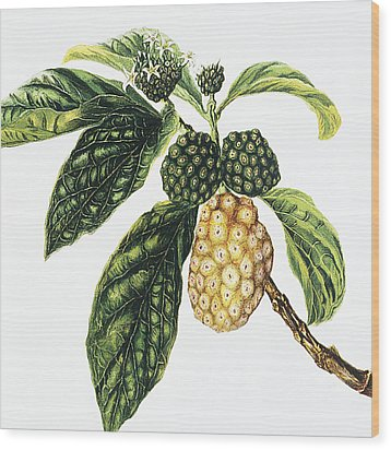 Noni Fruit Wood Print by Hawaiian Legacy Archive - Printscapes