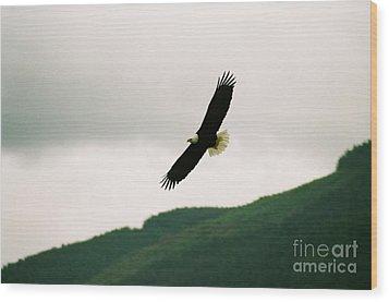Nooksack Eagle Wood Print by Brent Easley