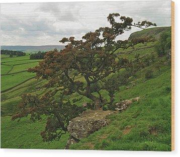 Norber Hawthorn Wood Print